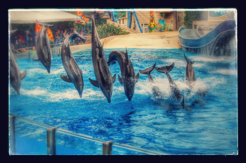 Dolphins-at-Seaworld